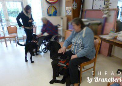 Visite de nos amis les chiens - La Brunetterie