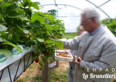La cueillette dans le potager - La Brunetterie
