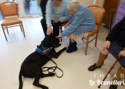 Le chien des résidents : Oran - La Brunetterie